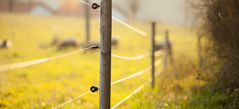 When Would You Need Electric Fencing and Is It Safe